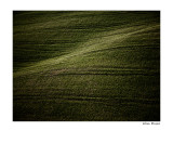 waves of gras