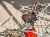 Jeffrey Louis's bird