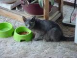 nice cat but a bit jumpy