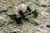 Dragonfly_13234