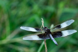 Dragonfly_14057