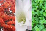 Italian flag in flowers