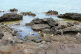 Puako tide pools