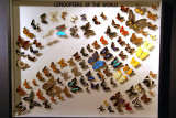 Lepidoptera of the world