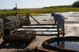 Harvesting sea salt at the Kauai salt ponds