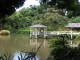 Haiku pond