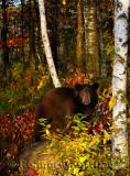 177 Bear 5.jpg