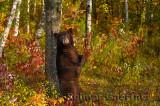 177 Bear 8.jpg