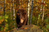 177 Bear 10.jpg