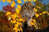 177 Bobcat 2.jpg