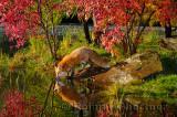 177 Foxes 8.jpg