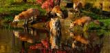 177 Foxes 11.jpg