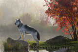 177 Wolf 3a.jpg