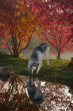 177 Wolf 7.jpg
