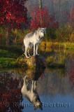 177 Wolf 8.jpg