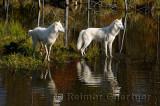 178 Arctic Wolves 1.jpg