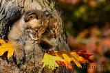 178 Bobcat kittens 6.jpg