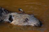 179 Beaver 5.jpg