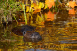 179 Beaver 9.jpg