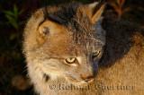181 Lynx 14.jpg