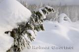 192 Geyser Snow 1.jpg