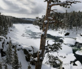 192 Yellowstone River P.jpg