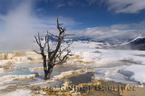 193 Mammoth Hot Springs 2.jpg