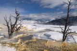 193 Mammoth Hot Springs 3.jpg
