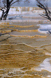 193 Mammoth Hot Springs 5.jpg