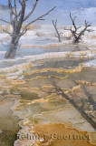193 Mammoth Hot Springs 6.jpg