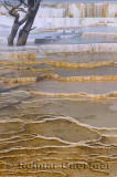 193 Mammoth Hot Springs 7.jpg