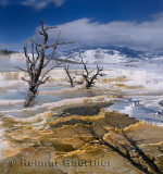 193 Mammoth Hot Springs 8.jpg