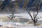 193 Mammoth Hot Springs 10.jpg