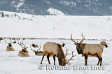 196 National Elk Refuge 5.jpg