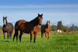 128 Mount Jefferson horses 2.jpg