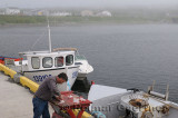 Fisherman filleting cod fish on the pier at Rocky Harbour Newfoundland in fog