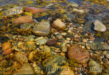 Seaweed and shellfish in Tide pool on the shores of Martins Point Newfoundland
