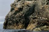 Jagged ancient rocks cliff face on the Atlantic coast of Twillingate Island Newfoundland