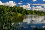 238 Millbrook Geese 3.jpg