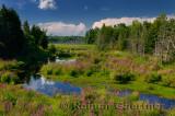243 Wetland 2.jpg