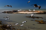 Small Atlantic ocean Island with ancient fortified ruins from Sqala du Port Essaouira Morocco