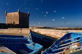 Flock of seagulls over blue fishing boats and Sqala du Port at Essaouira Morocco