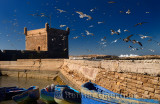 Thick flock of seagulls over blue fishing boats and Sqala du Port at Essaouira Morocco
