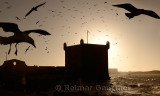 Monochrome silhouette of Sqala du Port Seagulls and Atlantic ocean at Essaouira Morocco