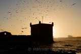 Sepia toned silhouette of Sqala du Port Seagulls and Atlantic ocean surf at Essaouira Morocco