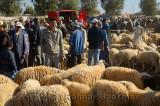 Crowded sheep market at Ait Ourir Morocco for sacrifice at Eid Al Adha