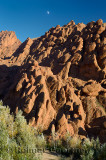 Red rock limestone fingers and poplar trees with moon in Dades Gorge Morocco