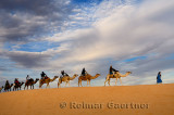 Tuareg blue Berber man leading a group of tourists on camels to the Erg Chebbi desert in Morocco