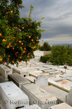 Orange trees in the Jewish cemetery in the Mellah of Fes el Jedid Morocco with storm clouds
