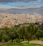 Olive trees on South hill at Borj Sud with view of Fes el Bali Medina Morocco on hazy morning
